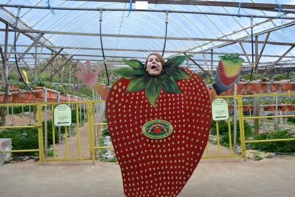 Edita, The Giant strawberry